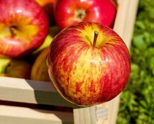 Piure de mere (200 g)
