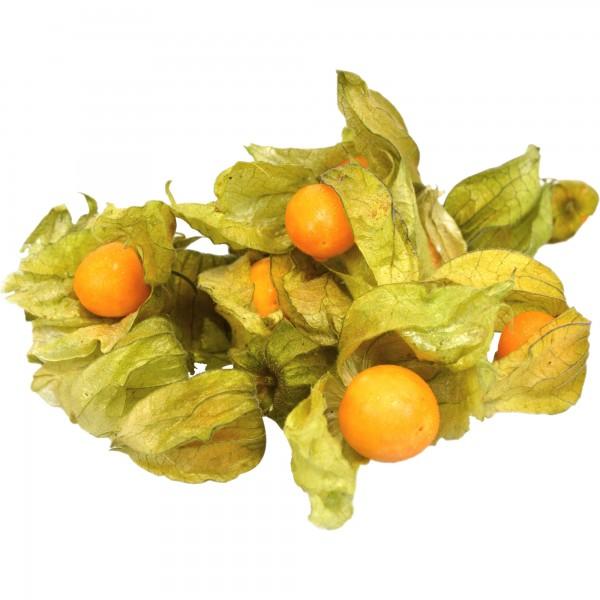 Phisalis- casoleta (0.1 kg)