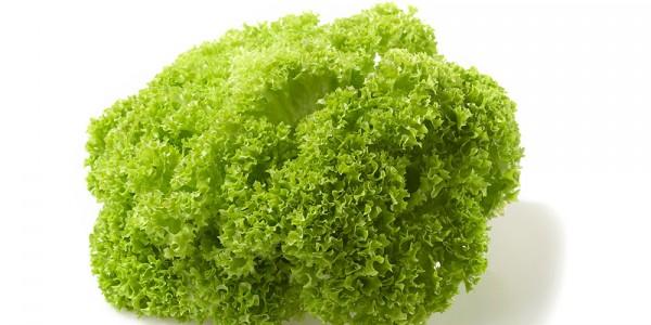 Salata Lollo Bionda Romaneasca