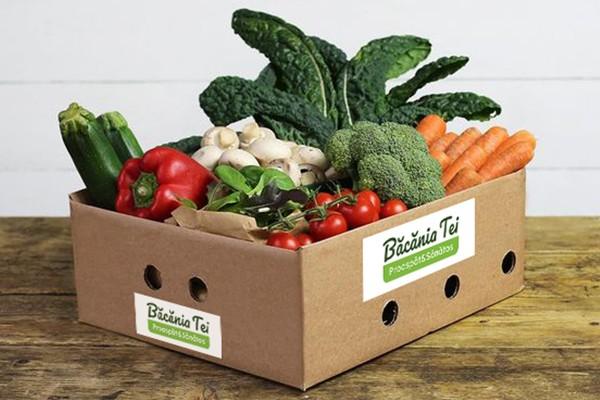 Lădiță Pentru Salată De Sezon (Mica) W37